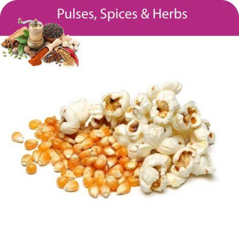 Popcorn Seed